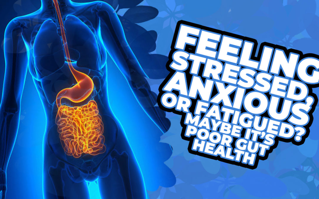 Feeling Stressed, Anxious, or Fatigued? Maybe It's Poor Gut Health